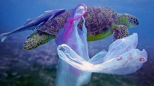 Se une Braskem Idesa a alianza para reducir plásticos en océanos